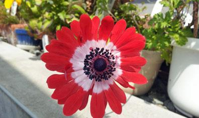 花壇2_50.jpg