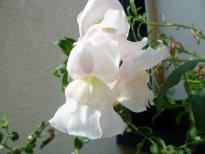 花壇手入れ11.11.12_14_10.jpg